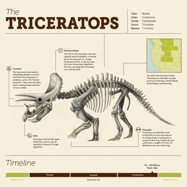 Triceratops Infographic